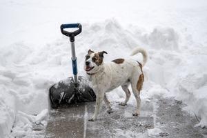 snow-shovel-4658403_1920.jpg